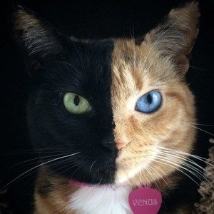 Venus the Two Face Cat net worth 2020