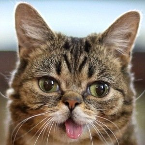 Lil Bub net worth 2020