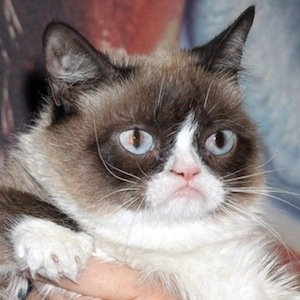 Grumpy Cat net worth 2020